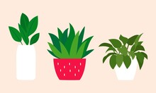 Distintos Tipos De Plantas.