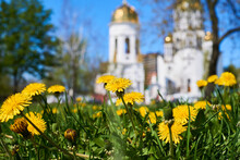 Beautiful Church,sky And Bright Yellow Spring Dandelions