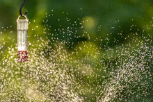Hummingbird Feeder In A Spray Of A Water Sprinkler