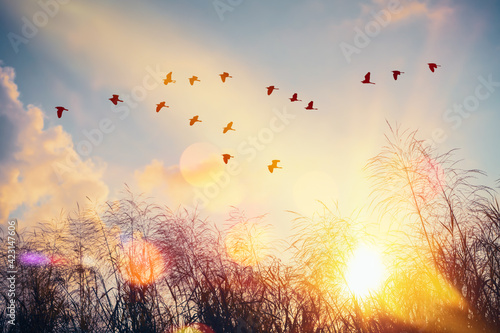 Billede på lærred Birds flying and grass flower on sunset sky and cloud abstract background