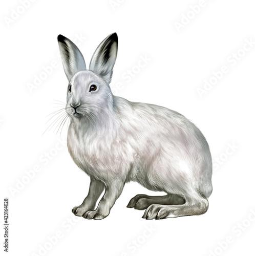 Canvas-taulu The mountain hare (Lepus timidus)
