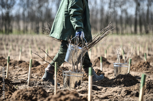 Planting trees on arid soil to fight against desertification Fotobehang