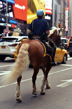 Horse Mounted Policeman Patrolling City Street