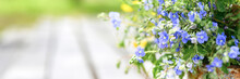 A Bouquet Of Wildflowers Of Blue Daisies And Yellow Flowers In Full Bloom In A Rusty Rustic Jar Against A Background Of Wooden Planks In Nature. Cottagecore Scene. Space For Text. Banner