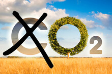 Planting More Trees Reduce CO2 - Reduction Of The Amount Of CO2 Emissions - Concept With Removing Letter C From CO2 To Get Oxygen