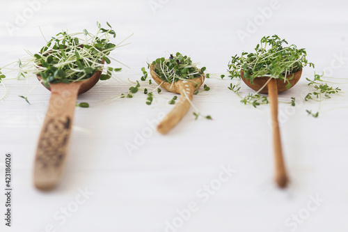 Tela Arugula, basil, flax, watercress sprouts microgreen on wooden and ceramic spoons