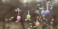 Holidays And Object Concept - Close Up Of Pussy Willow Branches Decorated By Multicolored Easter Eggs. Selective Focus. Easter Banner, Postcard