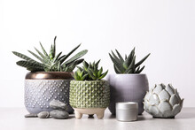 Beautiful Haworthia And Gasteria In Pots With Decor On Grey Table Against White Background. Different House Plants