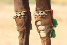 Camel Jewelry