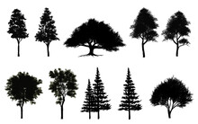 Collection Of Abstract Shadow Tree Side View Isolated On White Background  For Landscape And Architecture Layout Drawing, Elements For Environment And Garden