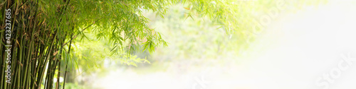 Nature of green leaf bamboo in garden at summer. Natural green leaves plants using as spring background cover page greenery environment ecology wallpaper