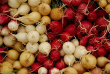 Red And White Radishes For Sale At Market, Portland, Maine
