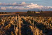 Large Cumulus Clouds Gather Over A Small Home Set Among Fields In The Palouse Valley Near Spokane, Washington.