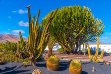 Cacti Garden At Museum Of Majorero Cheese At Fuerteventura, Canary Islands, Spain