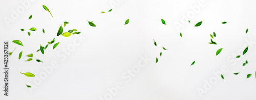 Collection of random green leaves falling in the air isolated on white backgroun Fototapet