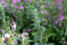 A Touch Of Gold Finch