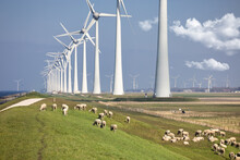 Dutch Dike Along IJsselmeer With Wind Turbines And Sheep
