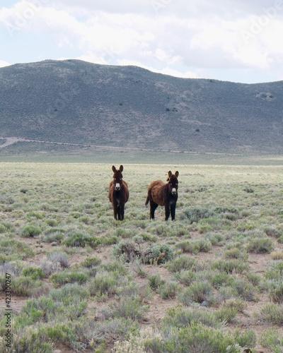 Fényképezés Fuzzy little donkeys.
