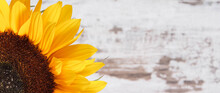 Beautiful And Vibrant Sunflower On Old Rustic Background. Decoration And Summer Time. Place For Text