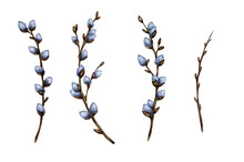 Watercolor Illustration Set Of Pussy Willow Twigs. Spring Branches. Easter Decorations. Vector Design Elements Isolated On White Background. Easter, Religion, Tradition, Palm Sunday.