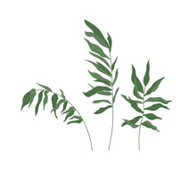 Set Of Tropical Leaves. Green Palm Branches Isolated On White Background. Vector Illustration.