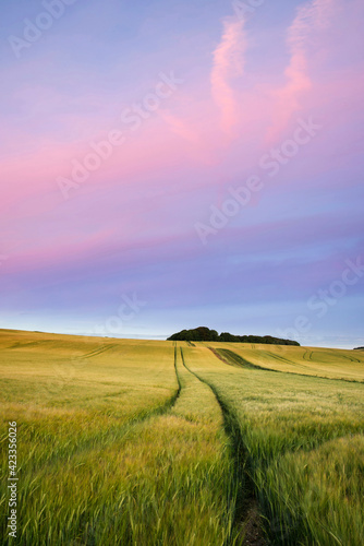 Summer landscape over agricultural farm field of crops in late afternoon Fototapet