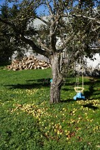 Under Neath The Apple Tree