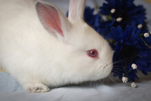 Profile Of Baby White Bunny Near Blue Flowers