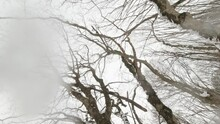 Low Angle View Female Person Hiker Steps In Snow Surrounded Forest Tree. Blank Space Background Extreme Solo Adventure