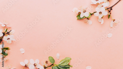 Fototapeta Spring border, spring blossom and April floral nature on pink background. Branches of blossoming apricot macro with soft focus. For easter and spring greeting cards with copy space. Springtime. obraz