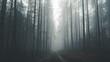 Leśna droga w gęstej mgle.
