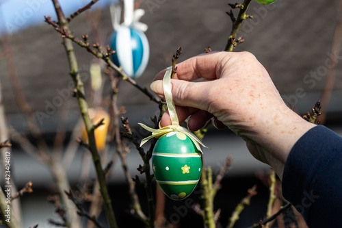 Photographie Zum Osterfest werden Ostereier  am Strauch aufgehängt