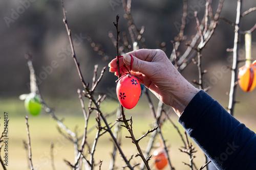 Tableau sur Toile Zum Osterfest werden Ostereier  am Strauch aufgehängt