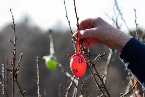 Zum Osterfest werden Ostereier  an einem Strauch aufgehängt Fotobehang