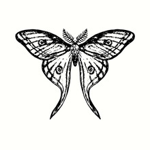 The Luna Moth (Actias Luna) Front View. Ink Black And White Doodle Drawing In Woodcut Style.