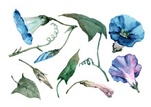 Set Of Petunia Flowers With Open Bells, Buds, Green Leaves And Branches. Hand Drawn Watercolor Isolated Elements On White Background For Design Of Cards, Wedding Invitations, Print, Textile, Banner.