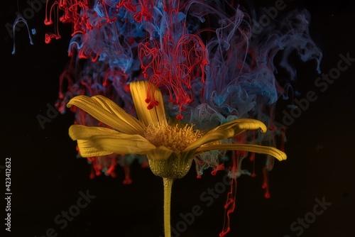 Piękny kolorowy kwiat