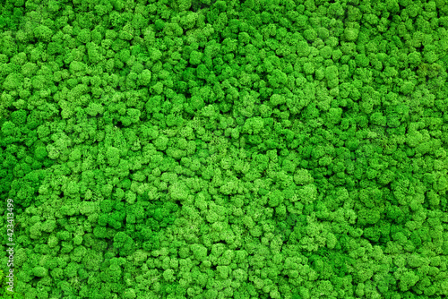 Moss background and wallpaper, green plants on inside wall of office