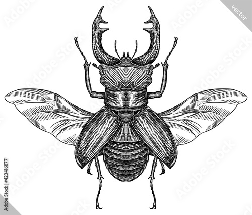 Fotografia Engrave isolated stag beetle hand drawn graphic illustration