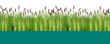 Vector Reed And Cattail Plants In The Lake Or Swamp Water Seamless Pattern. Flat Vector Illustration For Design Props.