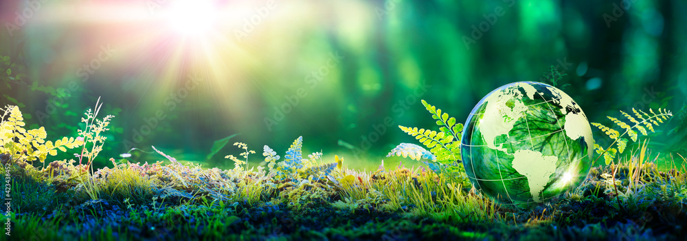Fototapeta Environment Concept - Globe Glass In Green Forest With Sunlight