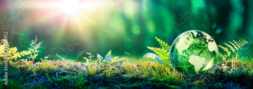 Fototapeta Environment Concept - Globe Glass In Green Forest With Sunlight obraz