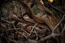 Tangle Of Dry Branches In Desert