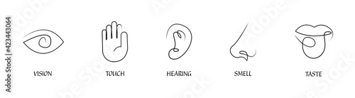 Fototapeta Five human senses one line drawing design icon set. Vision touch hearing taste smell senses collection. Human fillings icons. Human nervous system senses. Eye hand ear mouth nose icons set. Vector obraz