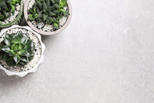 Beautiful Haworthia And Echeveria In Pots On Grey Table, Flat Lay With Space For Text. Different House Plants