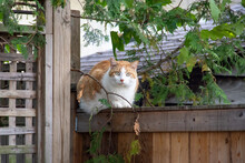 Outdoor Cat With Gorgeous Bright Green Eyes Lying On A Wooden Fence