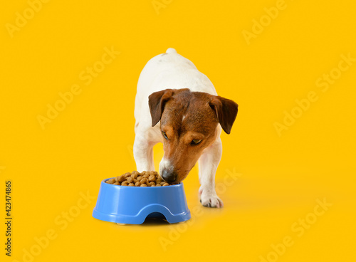 Tablou Canvas Cute dog eating food from bowl on color background