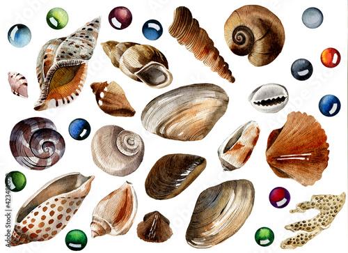 Fotografia, Obraz watercolor set with seashells and multicolored glass stones