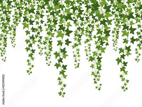 Green ivy Fototapet