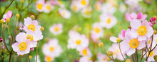 Panoramic Nature Summer Floral Background